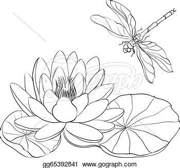 water lily  dragonfly lilies drawing dragonfly