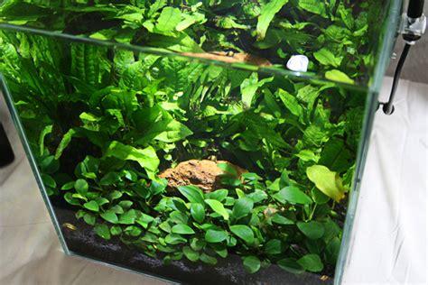 bitfuuls tanks emersed plants shrimp aquaponics nano
