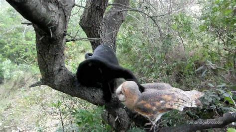 friendship   cat   owl