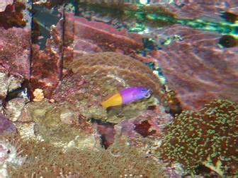 Taille Aquarium Poisson Taille Aquarium Poisson 28 Images Le Site Du Poisson 10 Erreurs De D 233 Butant Avec Le