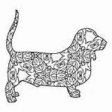 Basset Coloring Hound Designlooter sketch template