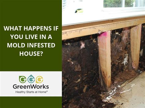 mold infested house greenworks
