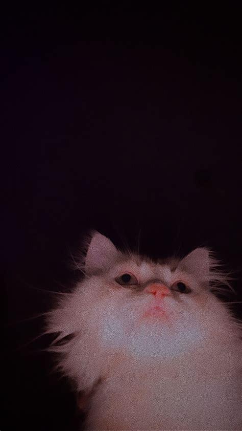 pin oleh di cats di 2021 bayi kucing
