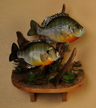 fish replica mounts  fibertech productions