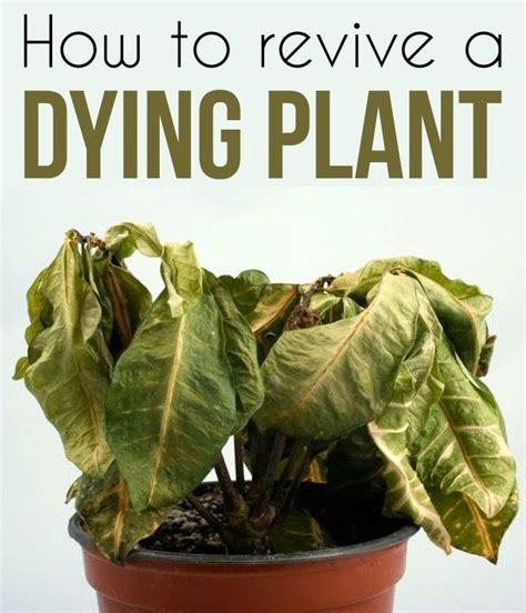 How To Revive A Dying Plant  Gardenstips Pinterest