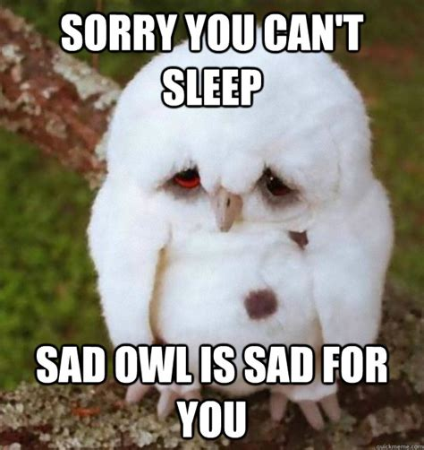Sad No Meme - sorry you can t sleep sad owl is sad for you no sleep heres sad owl quickmeme