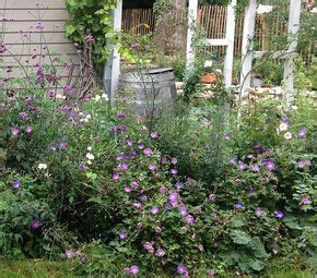 Garten Gestalten Ohne Viel Arbeit by 14 Blumen Die Den Garten Verzaubern Ohne Arbeit Zu Machen