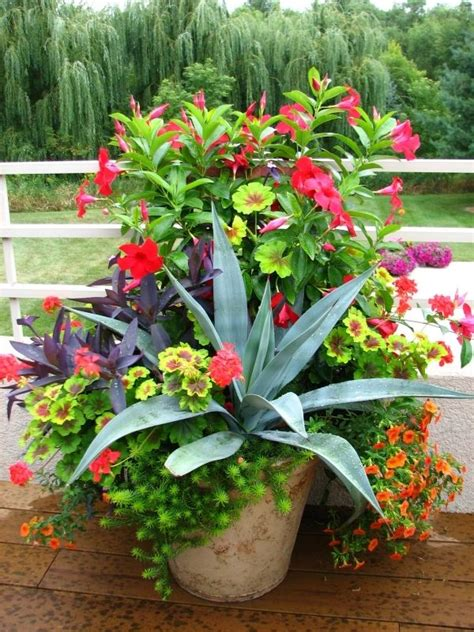3273 Best Images About Garden Containers On Pinterest