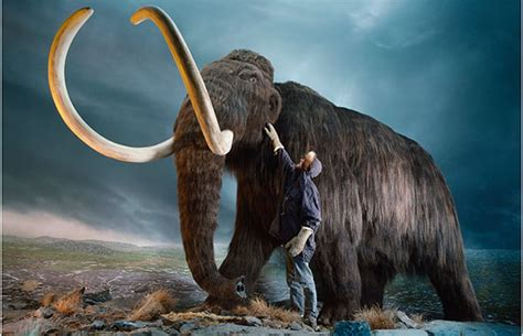 mammoth hemoglobin offers  clues   arctic