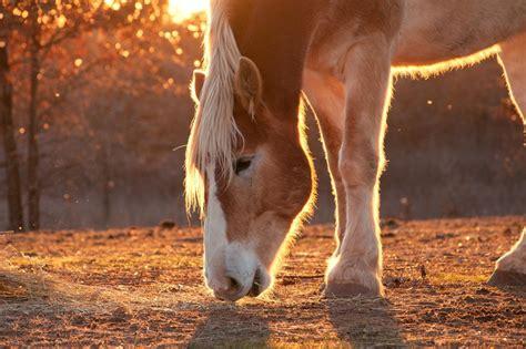 Altes Pferd Richtig Füttern
