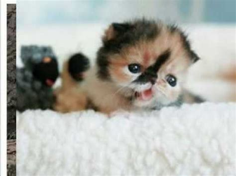 Cutest Pictures of Cute Kittens