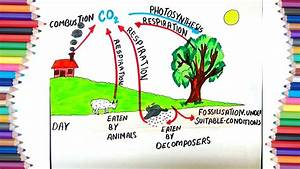 How To Draw  U0026quot Carbon Cycle U0026quot  During The Day For Kids