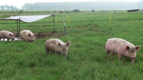 designing pasture subdivisions  practical management