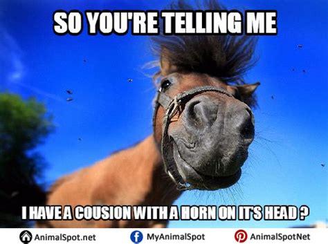 Gay Horse Meme - gay horse meme 28 images gay horse meme 28 images gay horse meme 28 images haha horse meme