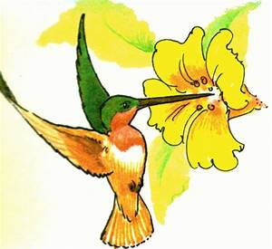 Hummingbird clipart free images image - Cliparting.com