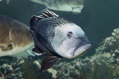 sea bass fish national aquarium 404