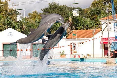 zoo portugal lisboa conhecendo nunca ver tive oportunidade sonho pensei isso fosse emocionante aqui mas disney