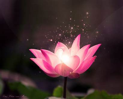 Lotus Flower Background Wallpapersafari Dream