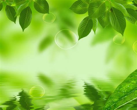 green leaf wallpapers wallpaper cave