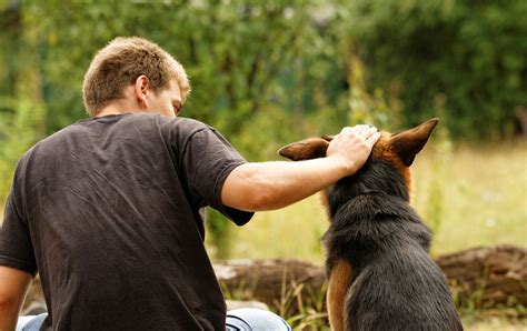 der hund der beste freund des menschen