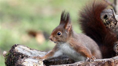 187 ecureuil