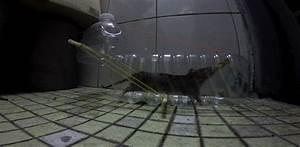 Comment Tuer Un Rat : comment capturer un rat taupier sur la france ~ Melissatoandfro.com Idées de Décoration