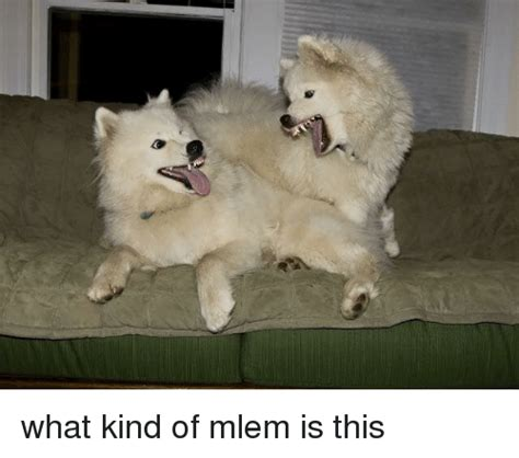 What Is This Meme - what kind of mlem is this dank meme on sizzle