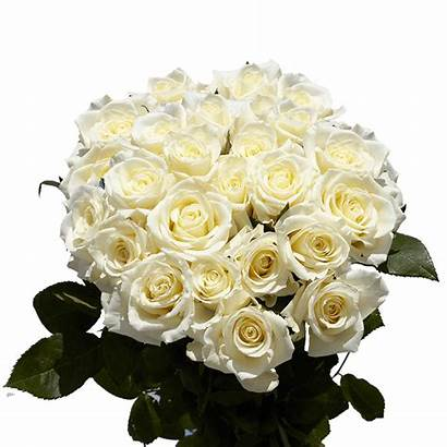 Roses Dozen Delivery Valentine Globalrose Rose Valentines