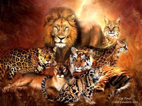 Big Cats Wallpapers  Wallpaper Cave