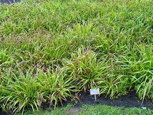Gartengestaltung Unter Bäumen : luzula sylvatica waldmarbel ~ Yasmunasinghe.com Haus und Dekorationen