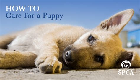 How To Take Care Of A Puppy. China Kitchen Rio Rancho. Kitchen Poems. Diy Kitchen Countertop. Decorative Wall Plates For Kitchen. Blue White Kitchen. Bath & Kitchen Showroom. Imprint Kitchen Mats. Kitchen Trashcans