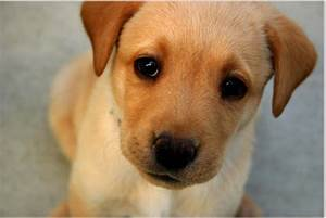 Dogs Probably Feel Sorry For Us -- Science of the Spirit ...