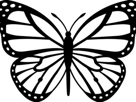 butterfly outline drawing  getdrawings