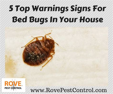 5 top warnings signs for bed bugs in your house rove pest