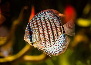 Fische Für Anfänger : aquaristik f r anf nger worauf sollte man achten tierheilkunde ~ Orissabook.com Haus und Dekorationen