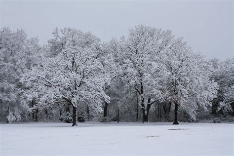snow capped trees by xiotax on deviantart