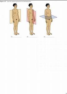 Optional Activity - Human Anatomy