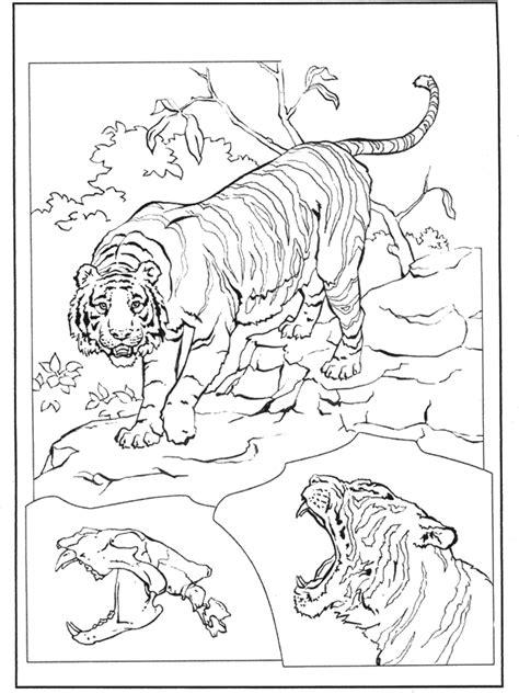 tiger  malvorlagen katzenartigen