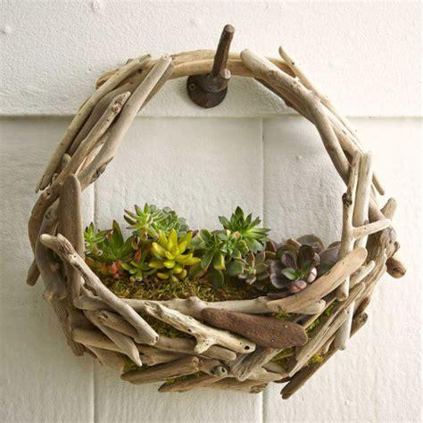 Driftwood Succulent Wall Garden   VivaTerra
