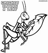 Cricket Coloring Pages Print Animal sketch template