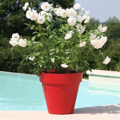 pot 224 fleurs ext 233 rieur terrasse soleilla 70cm riviera pas cher
