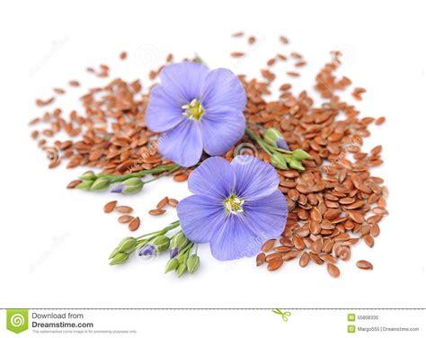 cuisiner avec des fleurs graines de avec des fleurs photo stock image 55806335