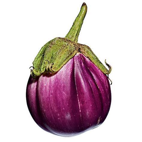 rosa bianca eggplant  favorite eggplant varieties