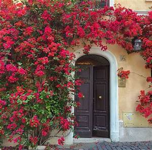 Colorful Mediterranean entry   Vines   Pinterest   Trees ...
