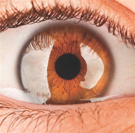 lights in eye why do take a while to adjust between darkness and