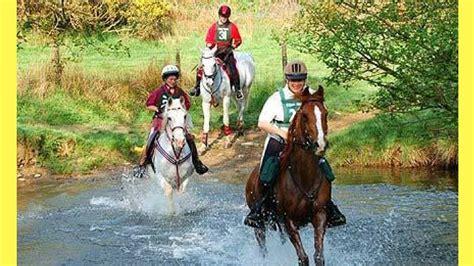 horse breeds endurance