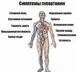 Артериальная гипертензия и гипертония в чем разница