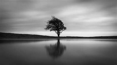 Tree Solo Wallpapers 4k Nature Imac Monochrome