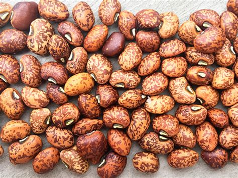 whippoorwill cowpea baker creek heirloom seeds