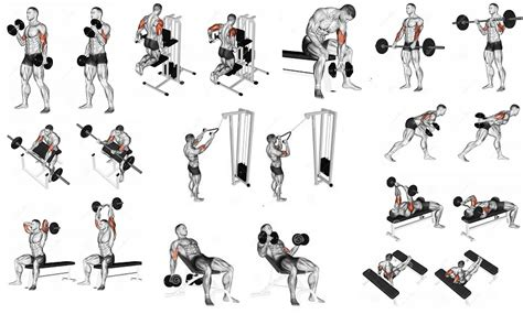 Standing Kickbacks Exercise by Build Arm Muscles How To Get Massive Arms All
